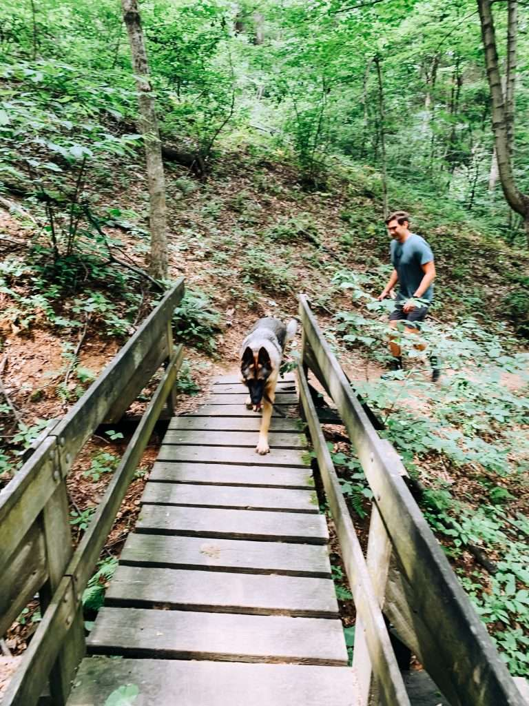 This ultimate guide to hiking with dogs covers everything you need to know to have a great day on the trails with your pooch!  Practical tips for hiking safely with dogs. It's important to follow certain guidelines to keep your pet safe and happy on a hike. #travelmore #traveltips #explore #wanderlust #travelblogger #travelblog #hiking #dogs #puppy #germanshepherd #hikinggear
